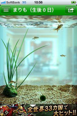 まりも - 水槽で小さな マリモ を育てることができる癒しの育成アプリ3