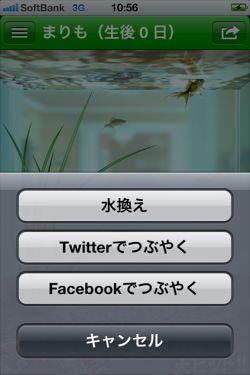 まりも - 水槽で小さな マリモ を育てることができる癒しの育成アプリ4