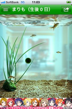 まりも - 水槽で小さな マリモ を育てることができる癒しの育成アプリ5
