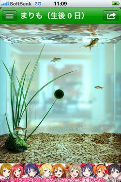 まりも - 水槽で小さな マリモ を育てることができる癒しの育成アプリ8